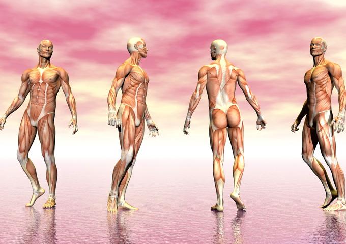 Психологические функции мышц