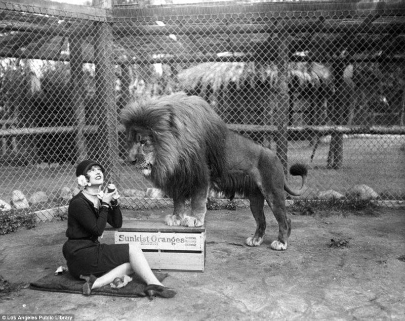 """наменитая """"голливудская львиная ферма"""": архивные фотографии 1925 - 1942 гг"""