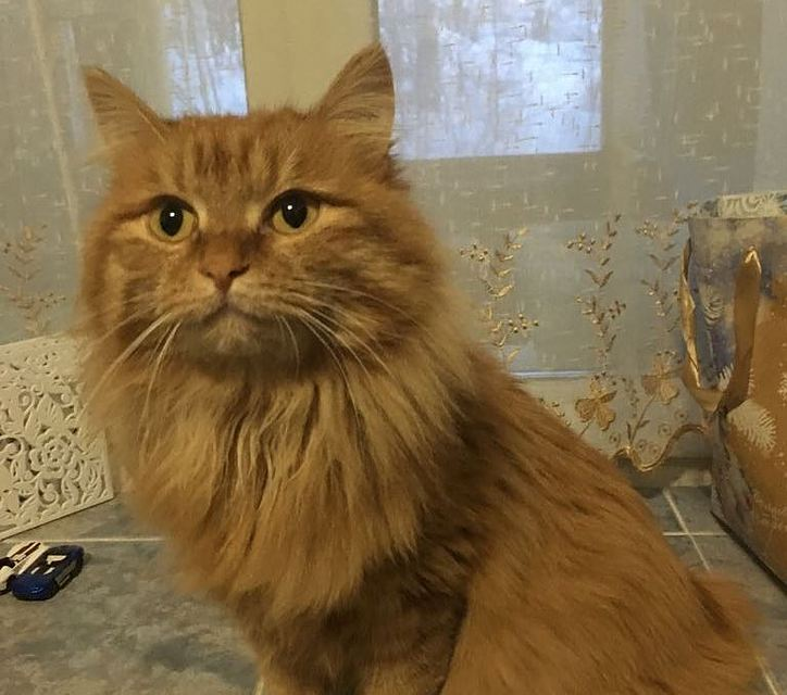 Амурчанин за 4 миллиона рублей продает кошку, предсказывающую итоги спортивных соревнований