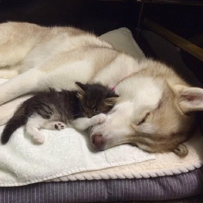 Сестры подобрали на улице маленького котенка и привезли его домой. Они не ожидали, что мамой для него станет собака