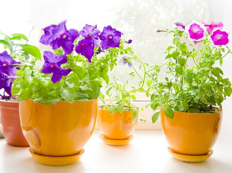 Волшебная таблетка: почему комнатным растениям не обойтись без янтарной кислоты