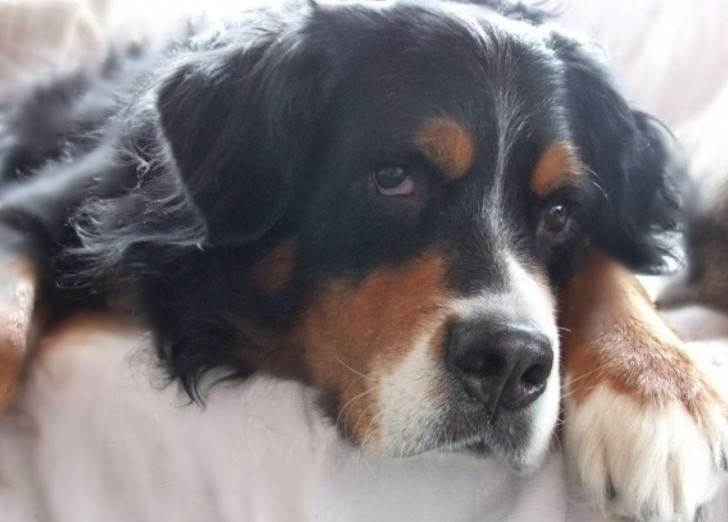 История про нерадивого зятя, умудрившегося потерять собаку и деньги