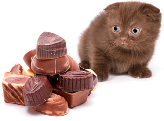 https://www.cathealth.com/images/cats_and_chocolate_cat_health.jpg