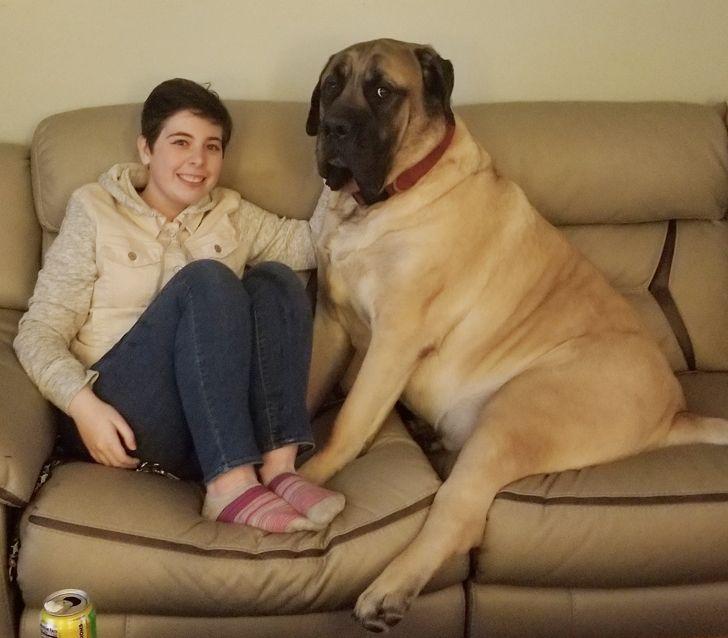 20 дальних родичей Цербера – такие же огромные, но в душе сущие щеночки