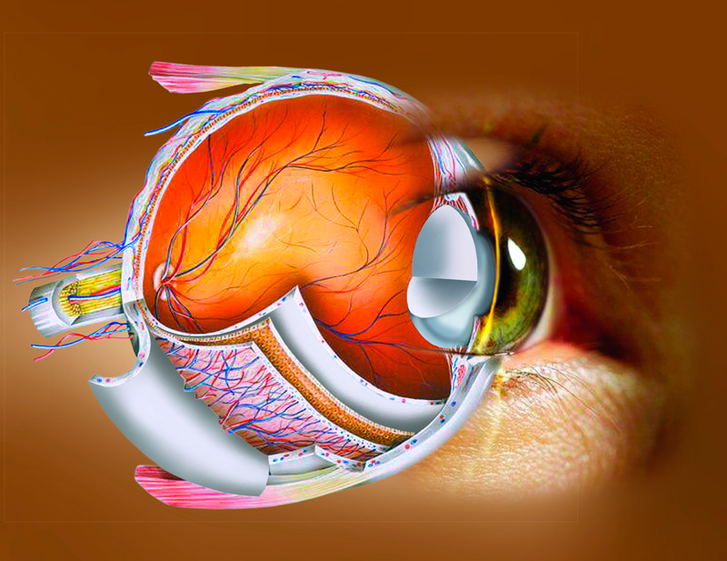 Как сохранить хорошее зрение…