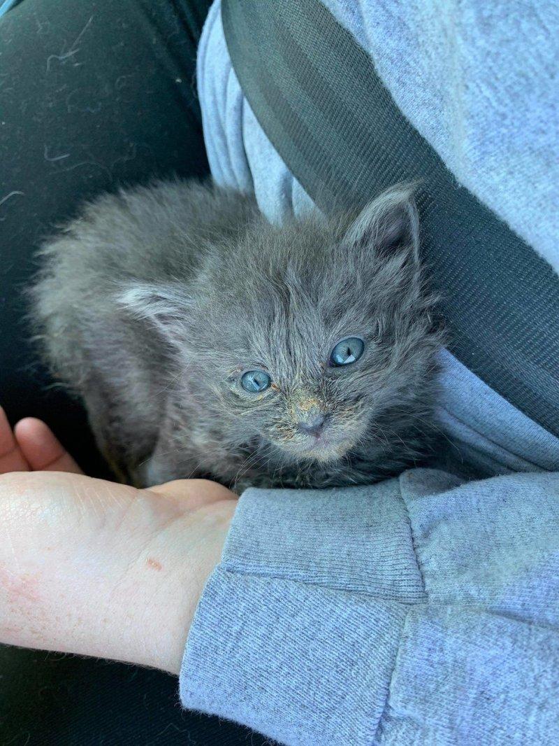 Слабый котенок еле держался на лапках, когда его подобрали истории спасения, история спасения, коты, котята, кошки, спасение животных