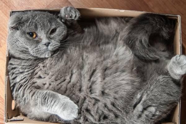 Почему коты любят прятаться …