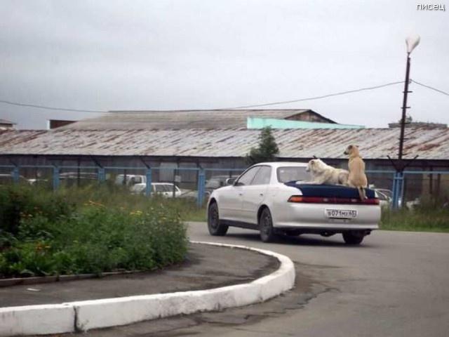 Автомобильные приколы для отличного настроения смешные картинки