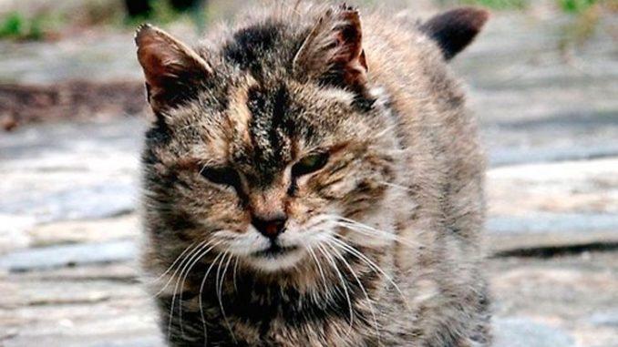 Храбрый уличный кот спас реб…