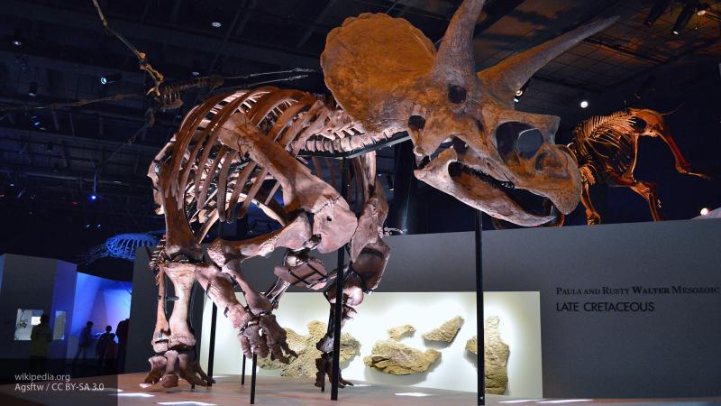 Ученые рассказали о захвате Земли млекопитающими после гибели динозавров