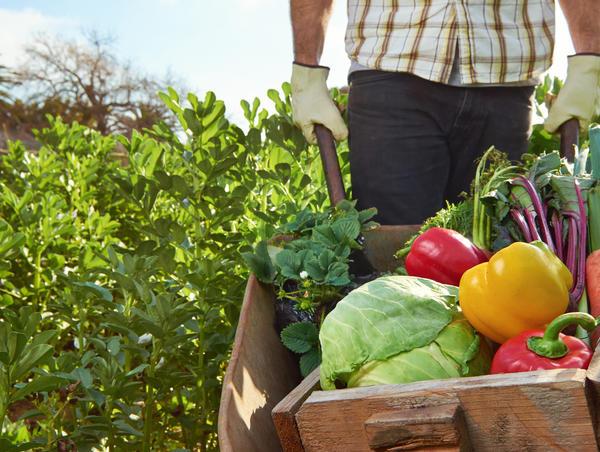 Здоровые растения в саду и огороде - мечта дачника
