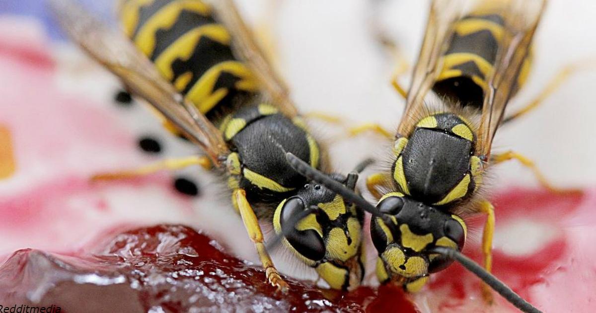 Убийство осы на людях в Германии стоит 50 тыс. евро! Не трогайте их на верандах в кафе