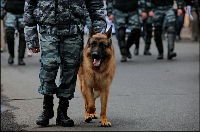 Служебные собаки породы
