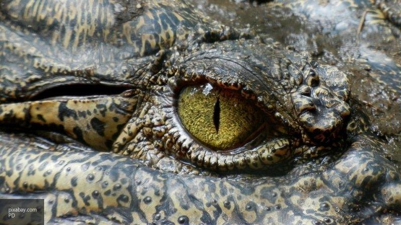 Ученые нашли останки  древнего крокодила, питавшегося динозаврами