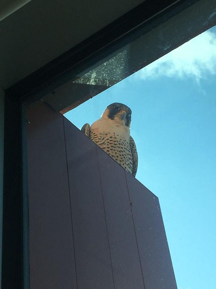 У меня тоже есть пернатый друг, который висит у моего окна
