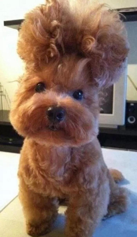 Вайбер, прикольные картинки стрижка собак