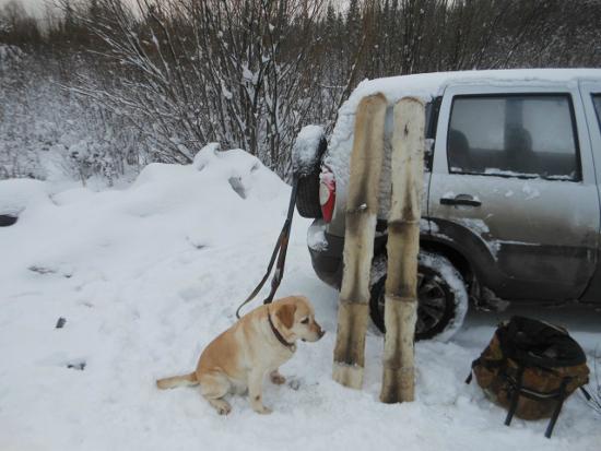 Почему вдруг взволновались собаководы и охотники?