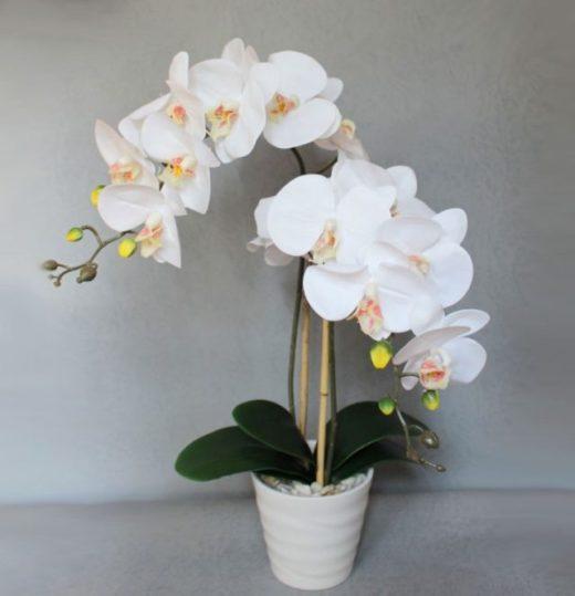 9 правил, благодаря которым орхидея будет буйно цвести круглый год. И всё исключительно своими руками!!!
