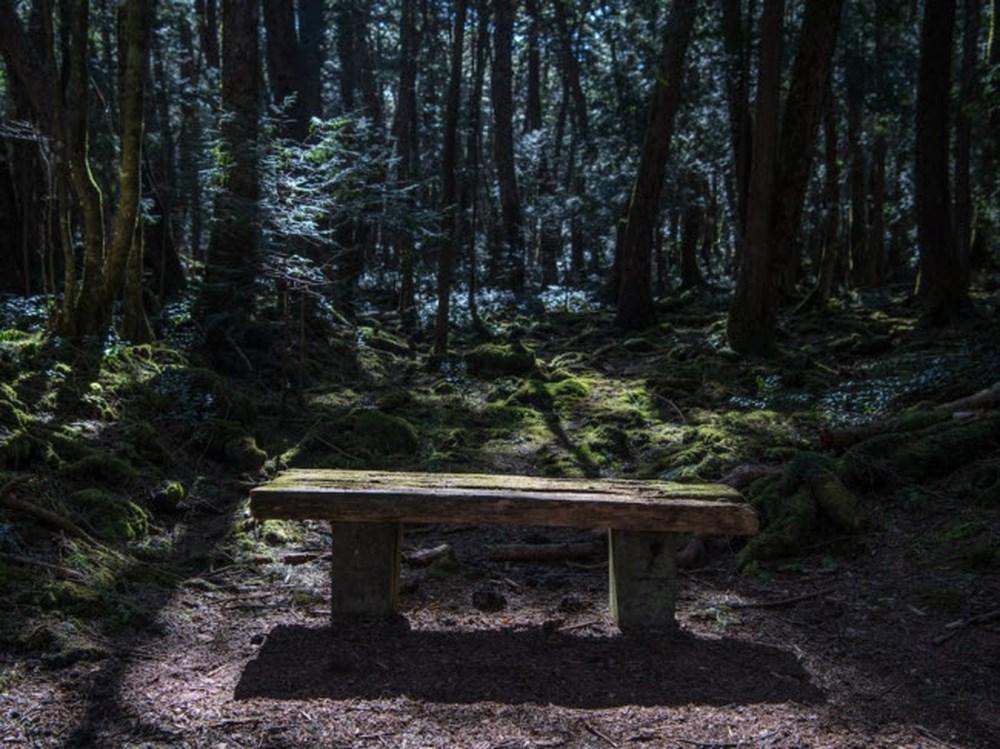 Некоторые жуткие леса нашего мира