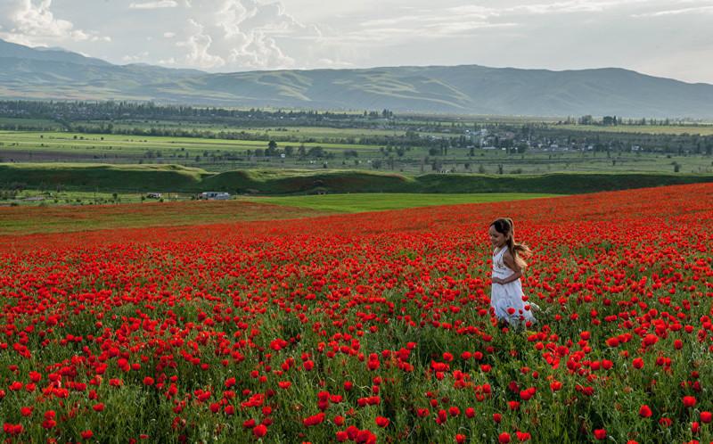 8. Жители столицы традиционно в это время года выезжают любоваться красотами природы art, Кыргызстан, пейзаж, ссср, факты