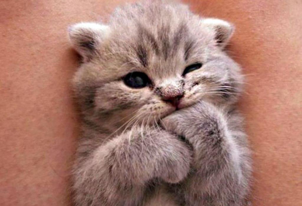 Открытки день, милые картинки котят с надписями