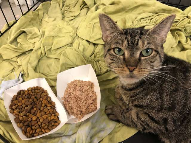 кошка рядом с едой
