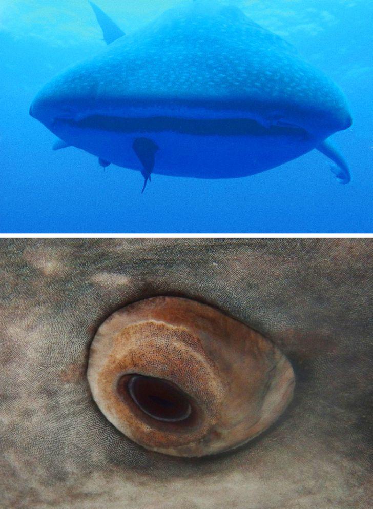 17 фактов о животных, узнав которые останется только аккуратно подобрать свою челюсть с пола чтобы, около, такие, больше, которые, более, взгляд, которая, благодаря, может, достигать, размеров, выжить, который, побольше, глаза, известно, движет, таких, средняя