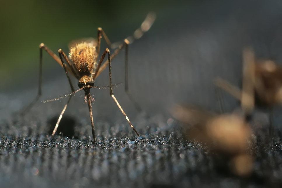 После укуса комара под кожей…