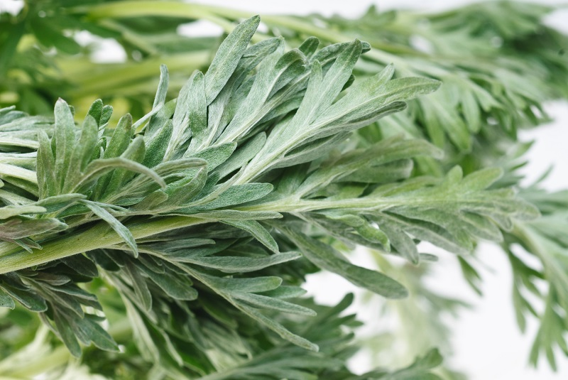трава для женского здоровья