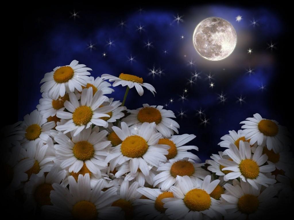 Вещие сны по знаку Зодиака