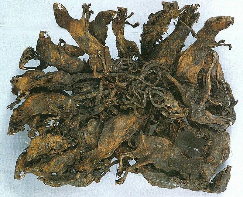 4. Крысиные короли артефакты, археология, загадки, история, находки, подборка, тайны, это интересно
