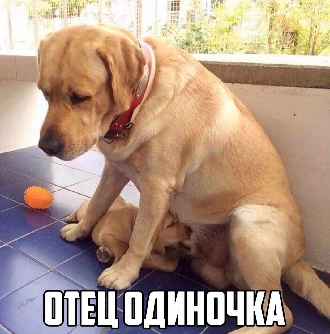 Фото картинки смешные до слез