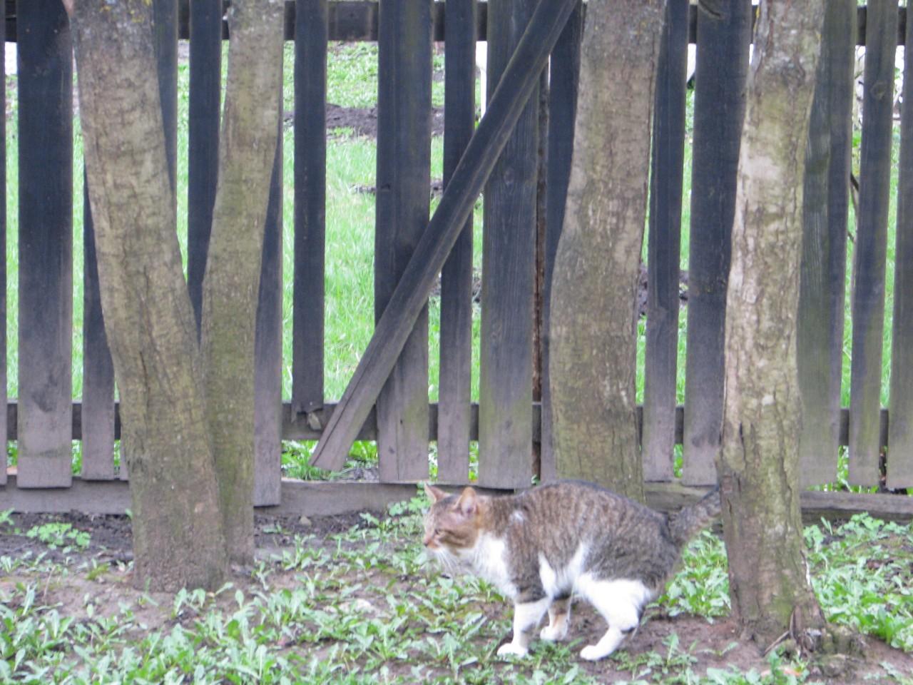Братья наши меньшие: забытая кошка
