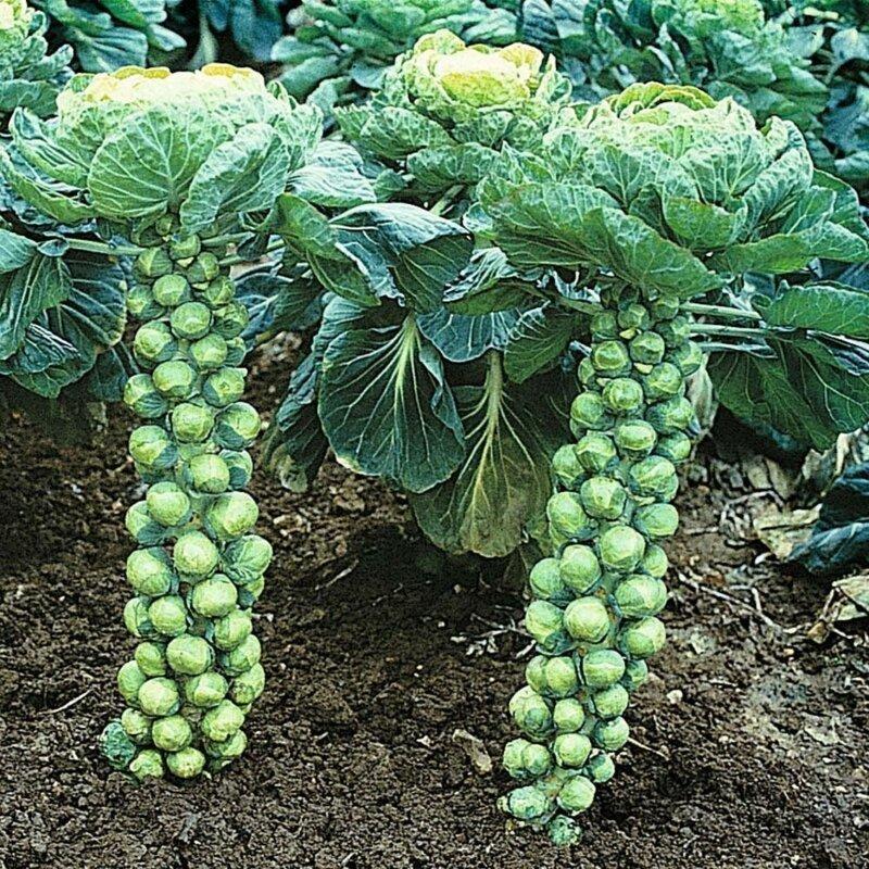 17 овощей и приправ, которые вы, скорее всего, видели лишь на прилавках дача,овощи,приправы,сад и огород