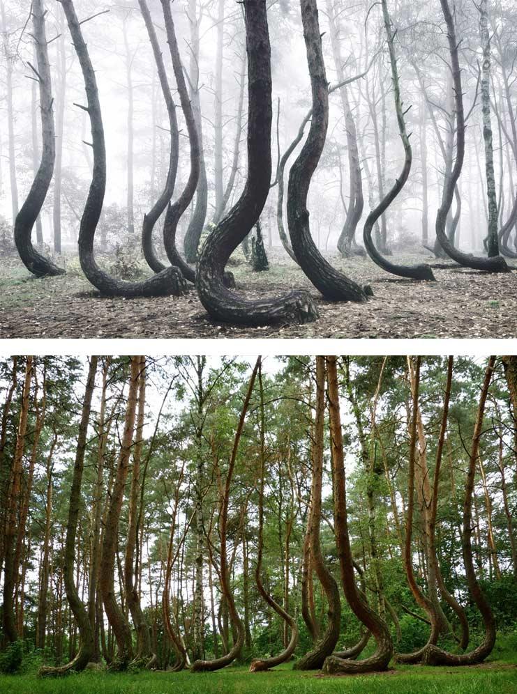 Самые красивые деревья мира.