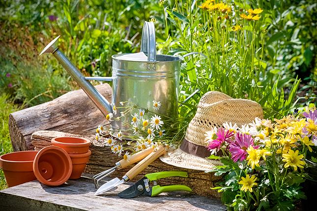 Что еще из аптечки пригодится в огороде: антибиотики, нистатин, витамины и еще...