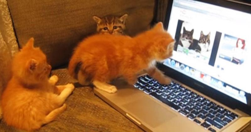 Три забавных котенка увидели в ноутбуке котов. Их реакция заставит вас улыбнуться!