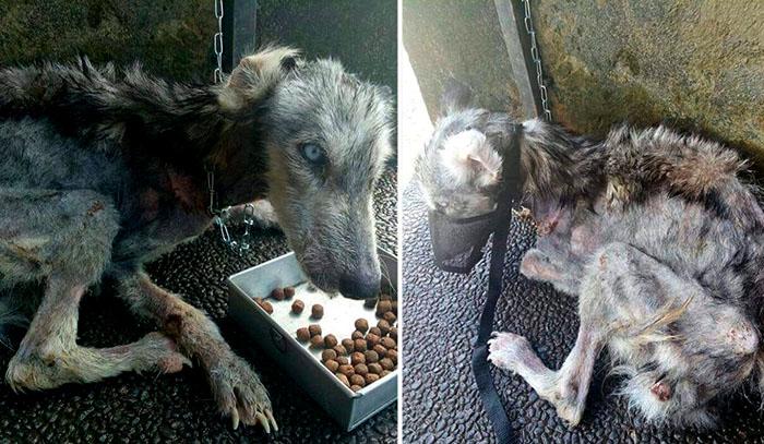 Бездомная собака на Бали.