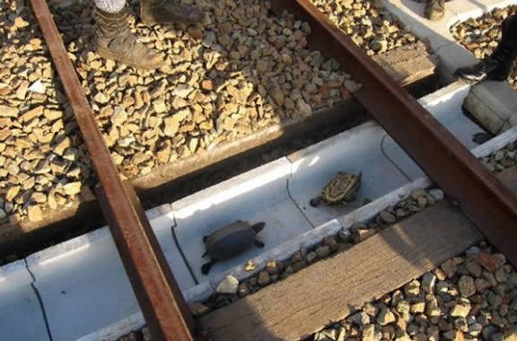 Экодуки - безопасные переходы для животных