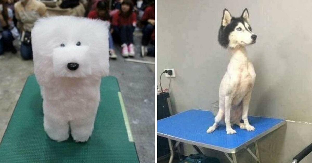 Картинки по запросу «Хозяин, за что?» 15 самых безумных стрижек собак и котов