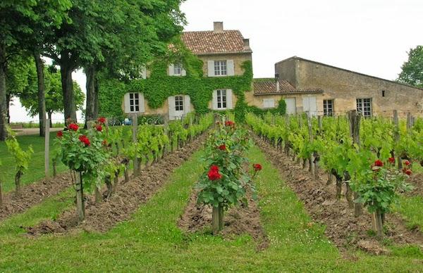 Соседи и враги виноградной лозы