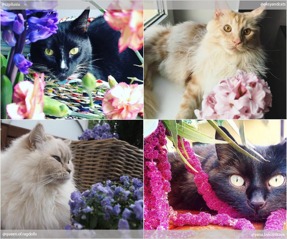 Коты VS цветы: самые интересные фото