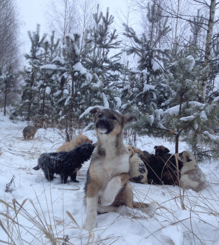 Житель Рязанской области спас 20 щенят, выброшенных на мороз в лес