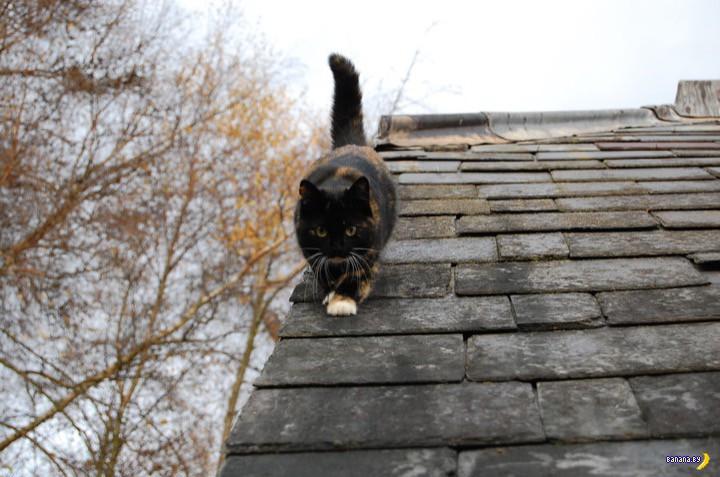 Ваши котики падали с высоты?