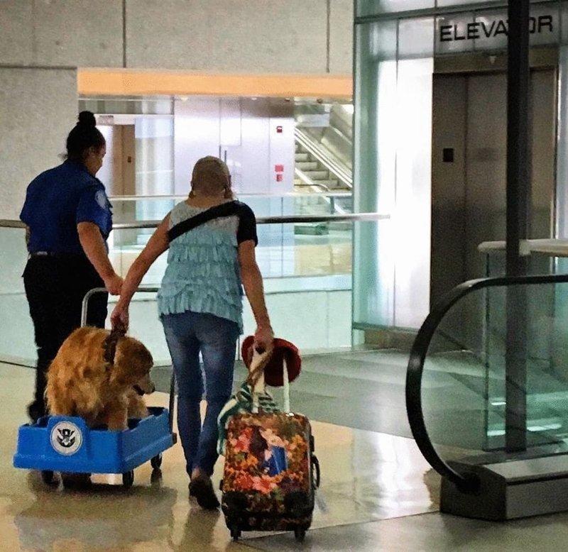 4. Пёсик поранил лапку, выходя из машины у входа в аэропорт, но его владелец уже не мог отменить полёт, поэтому доблестный работник аэропорта помог ему отвезти собачку в грузовой тележке и проследил, чтобы у них всё было в порядке в мире, добро, истории, люди, позитив, фото