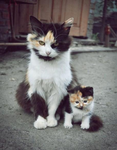 В маму животные, мамочки
