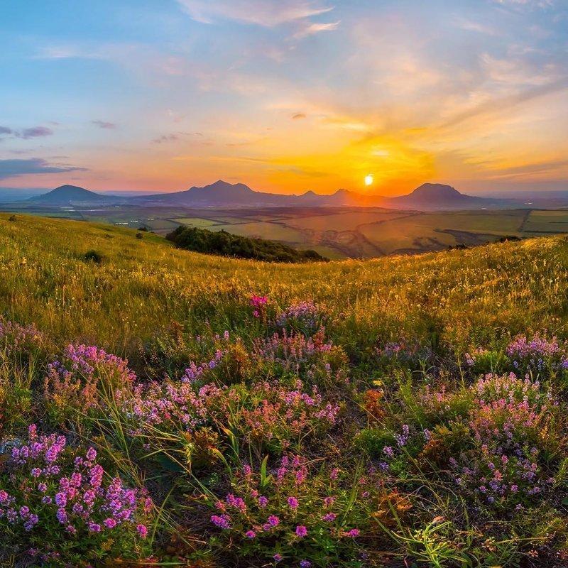 Цветущая степь в Кавминводах, Ставропольский край горы, леса, природа, природа России, российская природа, россия