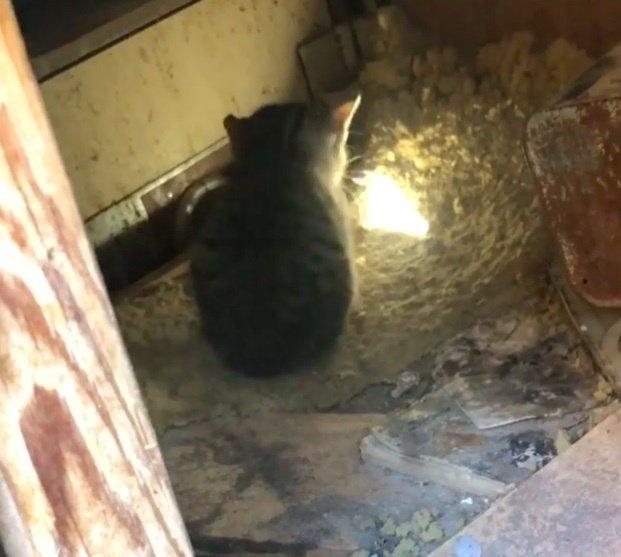 котенок в ловушке
