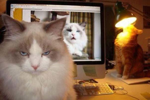 Одна из лучших фотографий животные, смех, снимок