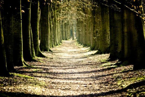 Красивые фотографии леса (50 фото)